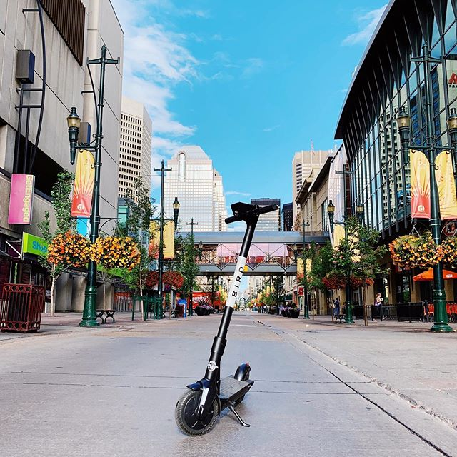 Bird electric scooter and buildings